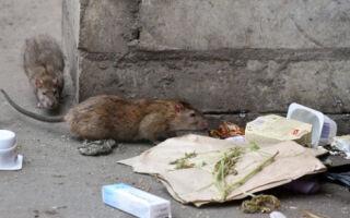 Средства борьбы с крысами