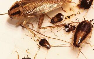 Избавление от тараканов способы и советы