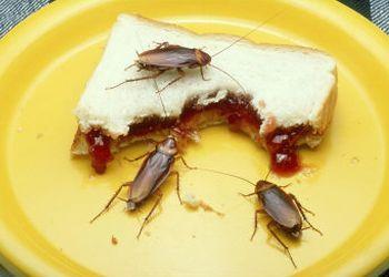 оставили еду для тараканов