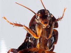 Что сниться значит если тараканы