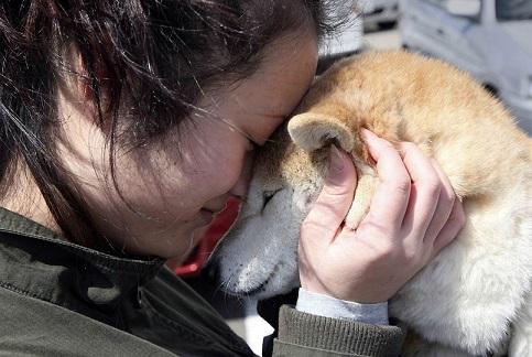 Человеческие вши не передаются от животных