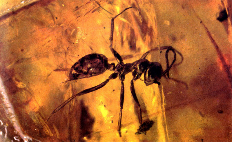 древний муравей в янтаре