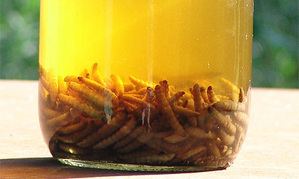 настойка пчелиной моли в банке 1
