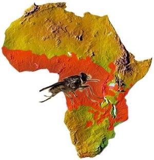 Ареал обитания мухи цеце