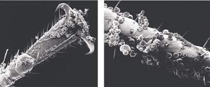 Гранулы гет на таракане