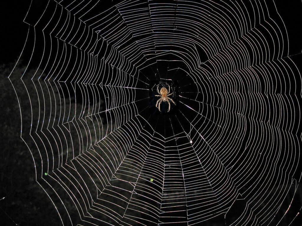 Паку плетет паутину во сне