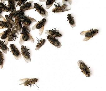 дохле мухи во сне