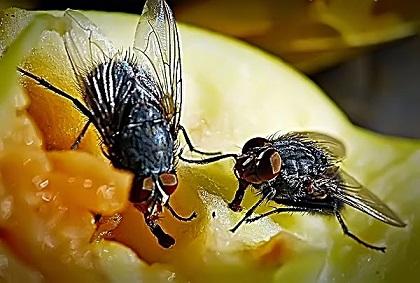 мухи питаются