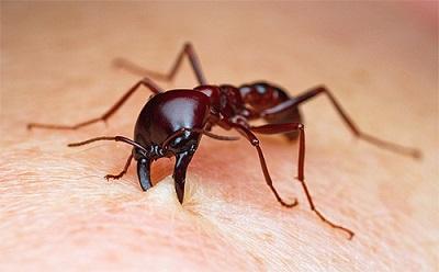 муравей укусил во сне