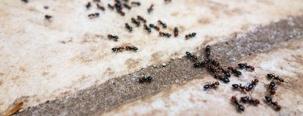 муравьи ползут через порог