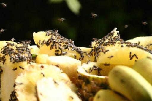 очаг размножения мошек