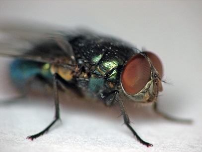 приметы о мухах