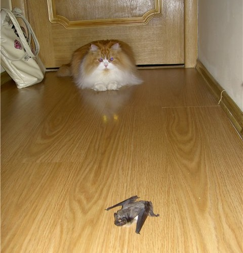 если летучая мышь залетела в дом