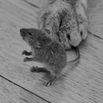 кот-ловит-мышь