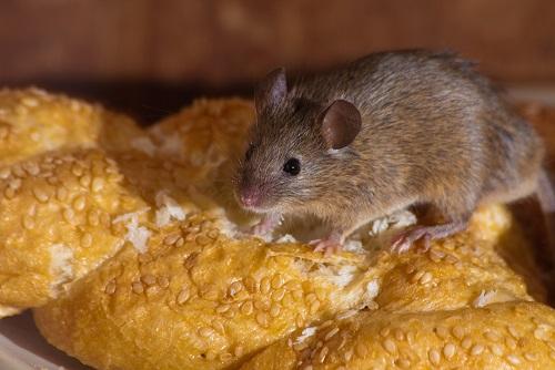 мышь на хлебе