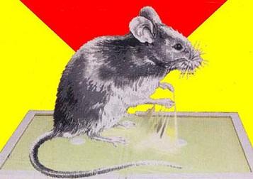 клей для крыс