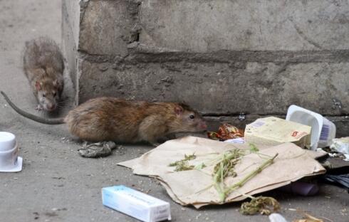 средство от крыс
