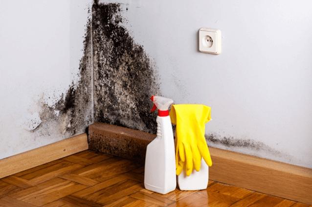 очистить плесень на стене
